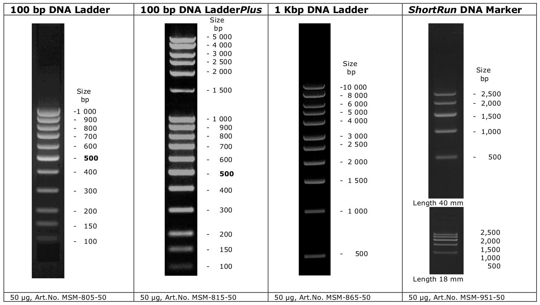Plasmidfactory L 228 Ngen Marker